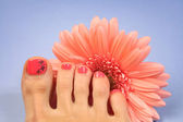Pedicure on blue — Stock Photo