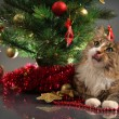 Cat and christmas - Stock Photo