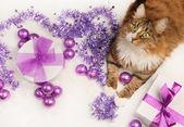 Christmas pet — Stock Photo