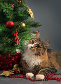 Cat and christmas — Stock Photo