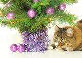 Bajo el árbol — Foto de Stock