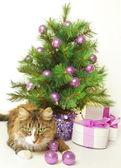 Gato juguetón — Foto de Stock