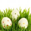 white eggs — Stock Photo