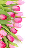 Blank with tulips — Stock Photo