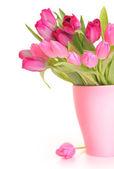 Pink spring — Stock Photo
