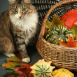 Pet and pumpkins — Stock Photo