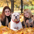 Fall and animals — Stock Photo
