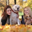 Stock Photo: Girls with dogs