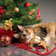 Christmas kitty — Foto Stock