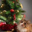 Kitty and tree — Stock Photo