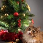 Kitty and tree — Stock Photo