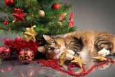 Christmas kitty — Stock Photo