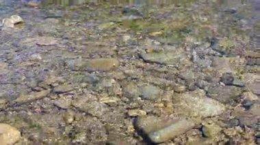 山の川の上を歩いてのバックパッカー. — ストックビデオ