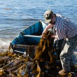 Workers unload seaweed kelp from the boat to shore. — Stock Photo