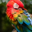 Colourful parrot macaw  — Stock Photo