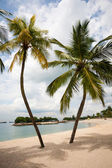 Sea beach with palms on the island of Sentosa in Singapore. — Stock Photo