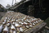 Dried sea fish on the pier in the port of Macau. — Stock Photo
