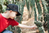 Boy reaches out to the cactus. — Stock Photo