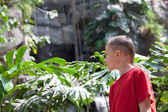 Boy examines tropical vegetation  — Stock Photo