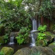 Small waterfalls in a tropical forest — Stock Photo