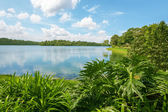 Upper Seletar Reservoir in Singapore — Stock Photo