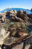 Summer landscape of rocky sea coast — Stock Photo