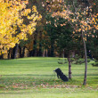 Fall season on a golf course — Stock Photo