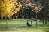 海で歩く秋天季节上高尔夫球课 — 图库照片