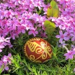 Royalty-Free Stock Photo: Croatian traditional easter egg on green grass and flowers