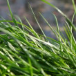 Grass sprinkled with spring water — Stock Video