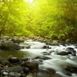Mountain River in the wood — Stock Photo #12177544