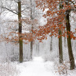 Winter forest — Stock Photo #12177592