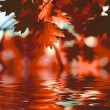 Red autumn leaves reflecting in the water — Stock Photo #12177643