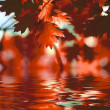 Royalty-Free Stock Photo: Red autumn leaves reflecting in the water