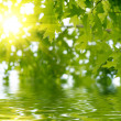 Green leaves reflecting in the water — Stock Photo