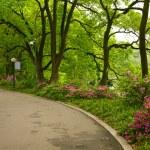 Summer park road — Stock Photo #12178152