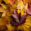 秋天的树叶背景 — 图库照片 #13845755