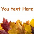 Stock Photo: Autumn leaves background. With space for text