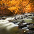 Autumn landscape with trees and river — Foto de Stock   #13845814