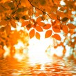 Stock Photo: Red autumn leaves reflecting in the water