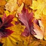 秋天的树叶背景 — 图库照片 #13845947