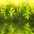 Green leaves reflecting in the water — Stock fotografie