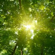 Sun in deep forest background — Stock Photo #13846037