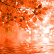Stock Photo: Red autumn leaves reflecting in the wate
