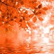 Red autumn leaves reflecting in the wate — Stock Photo #13846224