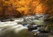 Autumn landscape with trees and river — Stock fotografie