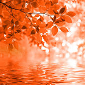 Red autumn leaves reflecting in the wate — Stock Photo