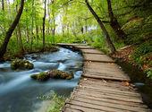 Dřevěný chodník v parku — Stock fotografie