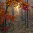 Autumn forest — Stock Photo #16333153