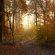 Autumn forest — Stock Photo #16333161